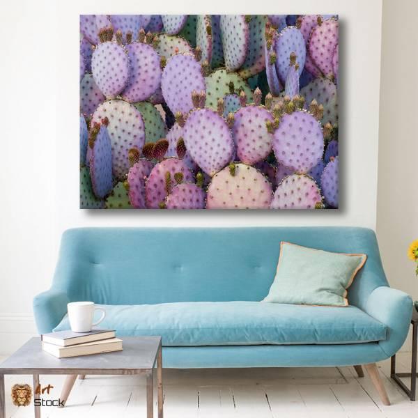 Нежные кактусы
